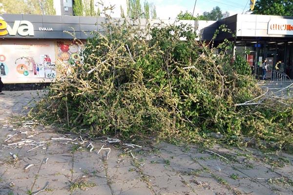 Апельмон Запорожье вырубил деревья