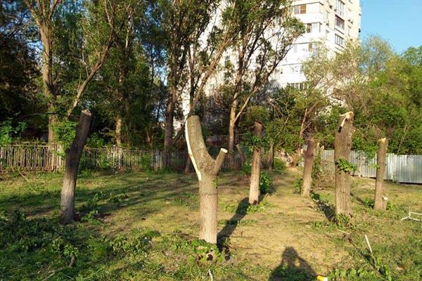 Апельмон Запорожье зеленая зона