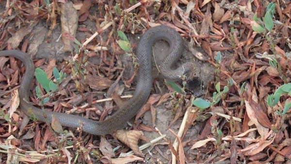 Цапля и змея-01